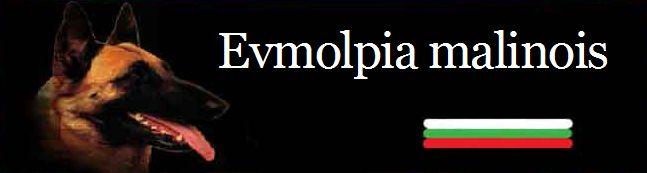 """Развъдник за Малиноа """"EVMOLPIA MALINOIS"""""""