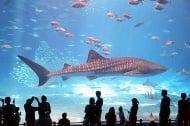 10-те най - големи и удивителни аквариуми в света (1 част)