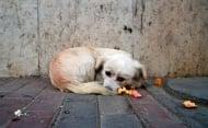 150 лв. глоба плаща всеки, който храни улично куче или коте в Благоевград