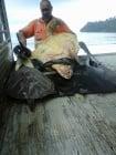 Мъж купува костенурки от пазара, за да ги върне обратно в морето