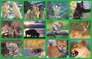 Дивите животински видове в България и по света