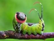 19 удивителни трансформации на гъсеници в пеперуди