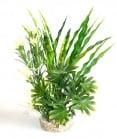 Растение Fiesta Aqua Bush 24см от Sydeco, Франция