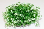 Растение Beauty Ball 10см от Sydeco, Франция