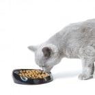 Хранилка за персийски и британски котки Wisker 1 от Savic, Белгия
