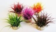 Растение Magic Nano Moss 8см от Sydeco, Франция
