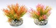 Растение Petite Moss 9см от Sydeco, Франция