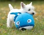 Неопренова топка за вас и вашето куче - Booga Ball от Flamingo, Белгия