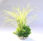 Растение Grass Bouquet 35см от Sydeco, Франция