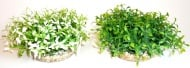 Растение Water Ball Maxi 18см от Sydeco, Франция