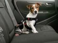Предпазен нагръдник за куче в автомобил - Karlie
