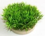 Растение Green Moss 7см от Sydeco, Франция