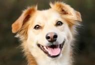 5 начина да направим кучето си по - щастливо