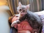 5 начина, по които котката ни възстановява, когато ни е зле