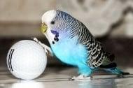 8 съвета как да отглеждаме здрав и щастлив папагал
