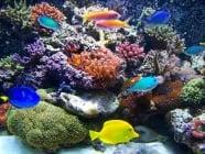 Полезно хоби - Отглеждане на декоративни рибки