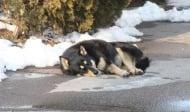 Запознайте се с българският Хачико - кучето, което не спира да чака своята починала стопанка