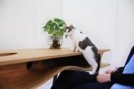 Бъдещият Рай за котки