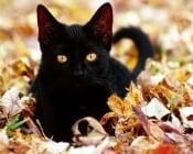 Петък 13-ти и истината за Черните котки