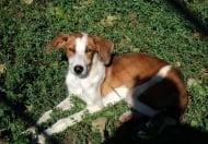 Приютът за кучета в Стара Загора обявява Ден на отворените врати за стимулиране на осиновяването