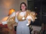 Домашните котки с най - внушителни размери