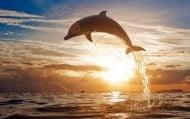 Духът на делфините