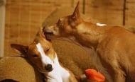 Ето как най - бързо и лесно да изкъпете кучето си, стъпка по стъпка