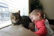 Ето какво се случи с котката, която спаси дете от нападението на куче