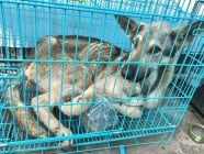Канадската фигуристка Меган Дюамел спаси куче от пазар за месо в Южна Корея