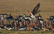 Фотоизложба за изчезващ вид птица ще бъде открита на 4 октомври в Шабла