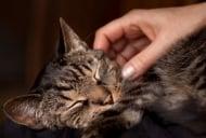 Как въздейства на човек галенето на котка?
