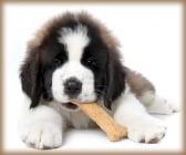 Хранене на кучето