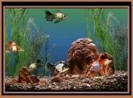 История на Декоративните рибки