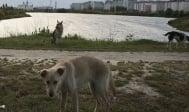 В Русия се избиват стотици бездомни кучета, заради Световното първенство