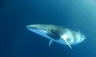 Как китовете се предпазват от слънчеви изгаряния?