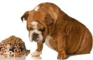Изследване на Храносмилателната система при кучето