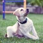 Изследване на кожата и космите на кучето
