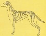 Изследване на Нервната система при кучето