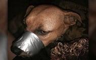 Жена залепи устата на кучето си с тиксо и качи снимките му в интернет