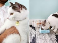 Как да направим нашийник с медальон за котката си?