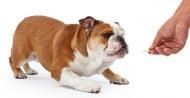 Обучение на кучето: Урок №9. Научете кучето на командата