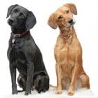 Обучение на кучето: Урок №13. Научете кучето на командата