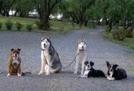 Обучение на кучето: Урок №15. Научете кучето на командата
