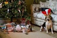 Kак да предпазим кучето си по време на празничните почивни дни?