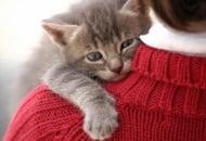 Как да разберете дали  котка Ви харесва?