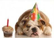 Какво да очаквате от кучето на възраст от 1 до 2 години?