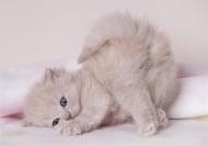 Как се гледа малко котенце?