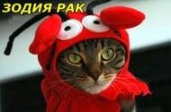 Каква котка сме според зодията?