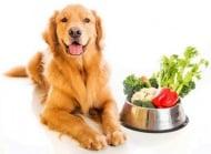 Какви плодове и зеленчуци могат да ядат кучетата?