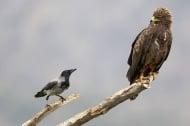 Стартира кампания за предотвратяване на престъпления срещу природата
